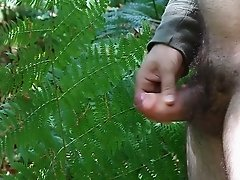 Sega nel bosco